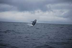 Big Blue Charters offers whale watching as well as Alaska Fishing.